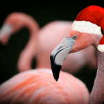 Flamingo wearing a santa hat to celebrate Christmas at our marketing agency warwickshire
