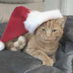 Ginger cat wearing a Santa Claus hate and lying on a grey blanket at Flamingo Marketing Agency in Warwickshire